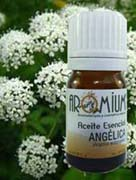 aceite esencial angélica