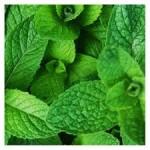 Aceite esencial Menta (Hierbabuena)