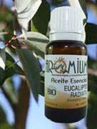 Propiedades eucalipto radiata
