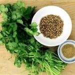 Aceite esencial Cilantro o Coriandro