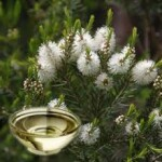 Aceite esencial Cayeput