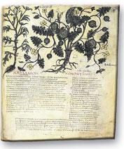 historia-aromaterapia