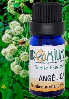 aceite esencial angelica