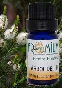 Aceite árbol del té propiedades y usos